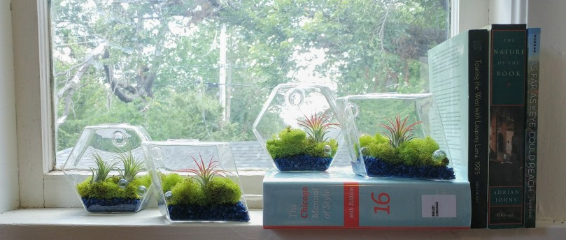 "Copies of ""The Chicago Manual of Style,"" ""The Nature of the Book,"" and several other books stacked in a windowsill with brightly colored terraria"